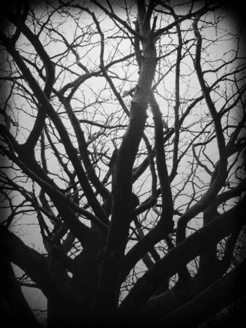 Demeter's Corpusules - by Jackie Fedyk